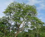 TUCANEIRO