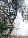 ESCOVA DE GARRAFA
