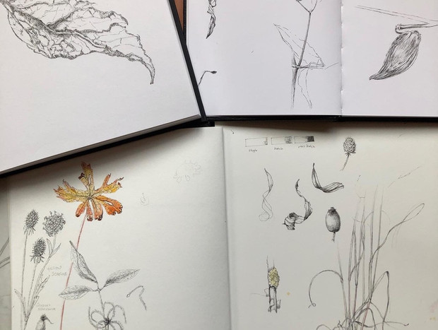 Glimpse into LCG's perpetual nature journal