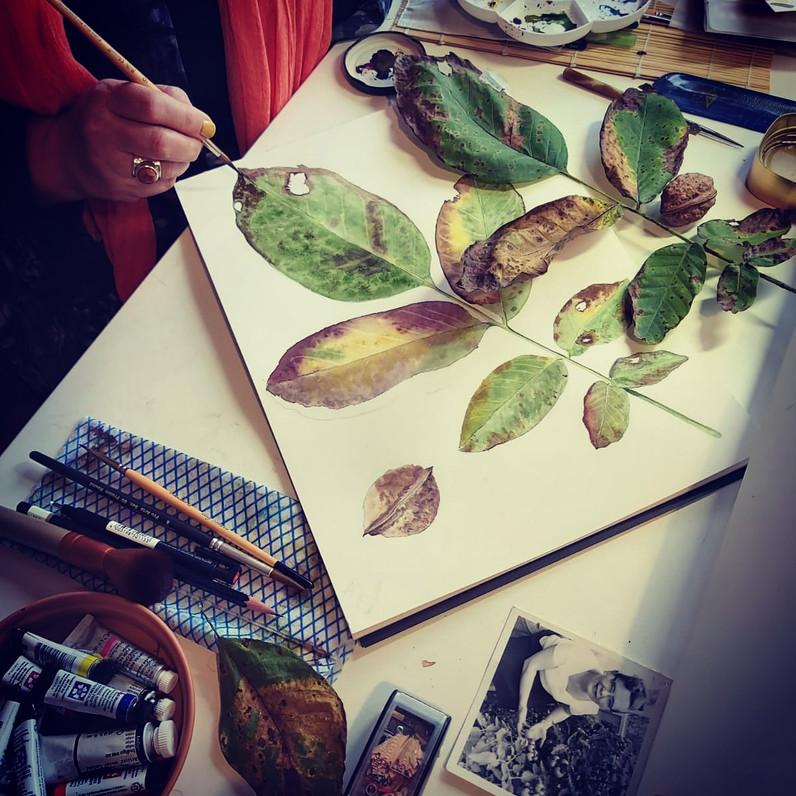 Corrinda's walnut leaves