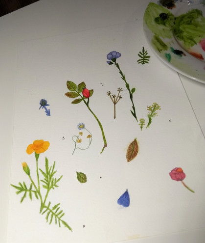 Minna's first botanical studies