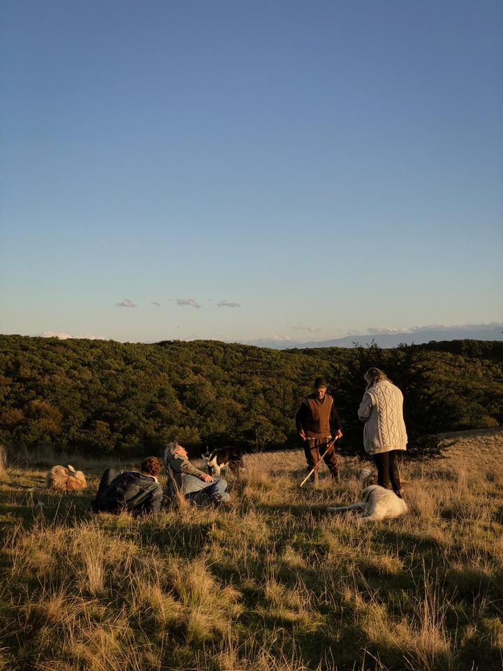 Evening on Dealul lui Fetea, with shepherd Moise.