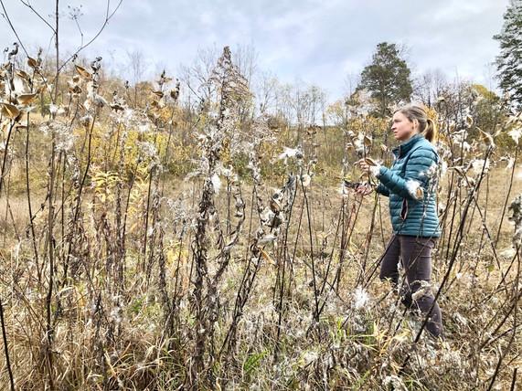 Sara Neahring in bursting milkweed
