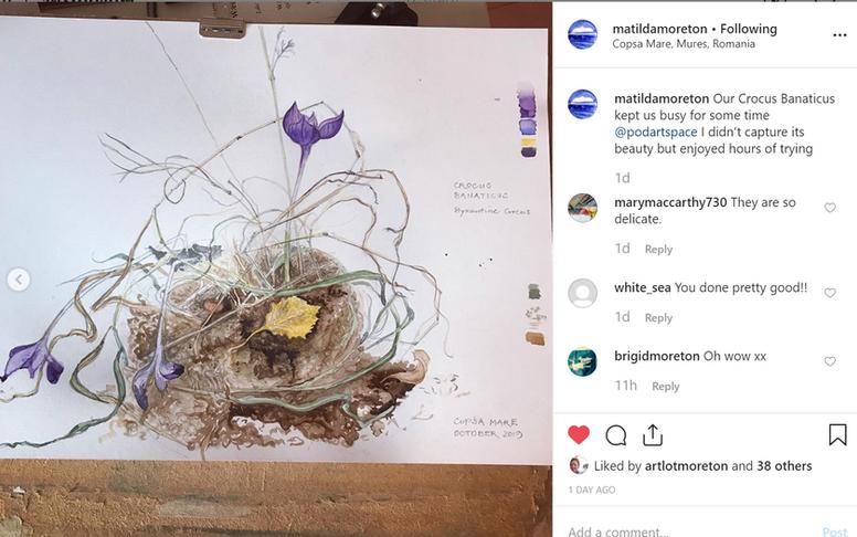 Matilda's nest