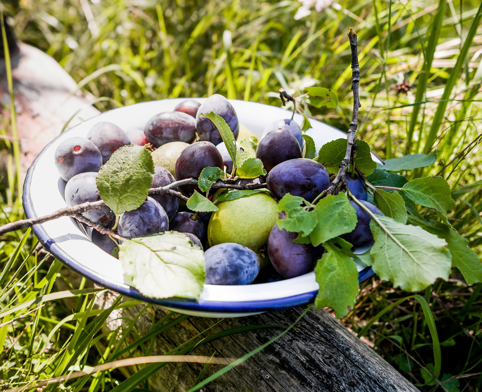 Wild plums and pears