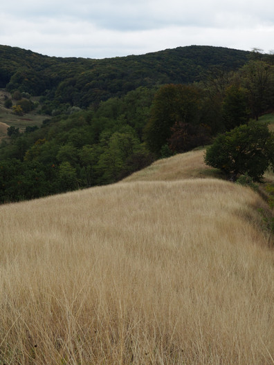 Autumn grasslands above Copsa Mare
