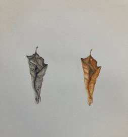 Lorraine's leaves