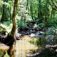 The Wild Swamp