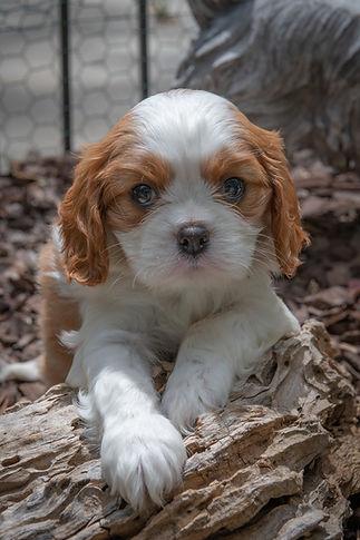 sharp puppy.jpg