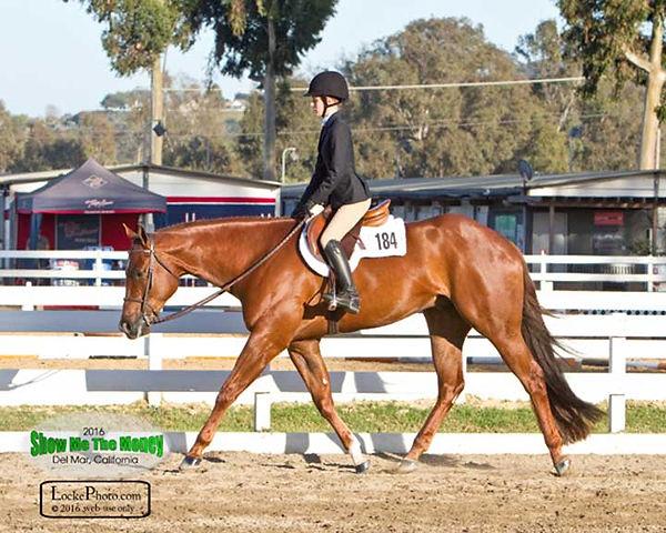 carter horse four.jpg