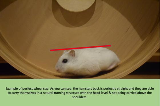 Choosing the Best Wheel for your Hamster
