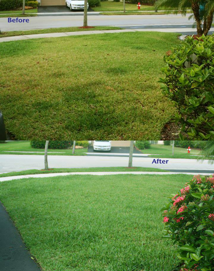 Before after Lawn copy