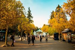 Berkeley in Fall