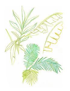 Skizzen aus dem Dschungel