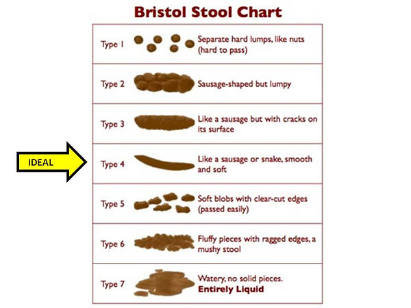 The Bristol Stool Chart