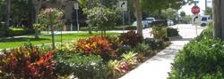 south florida landscape