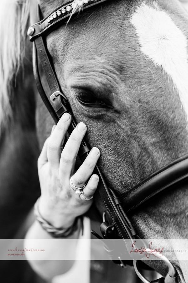 Horse Photography Bacchus Marsh 16.jpg