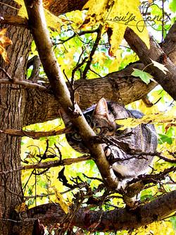 Geelong Pet Photography