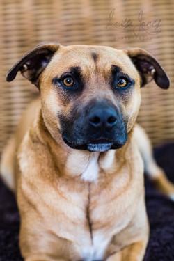 Dog photography Geelong
