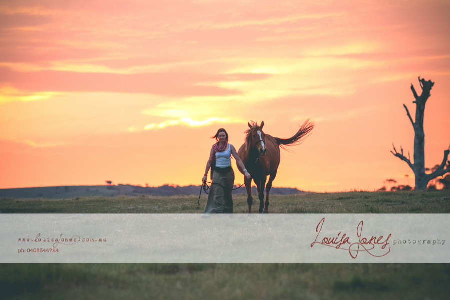Horse Photography Bacchus Marsh 19.jpg