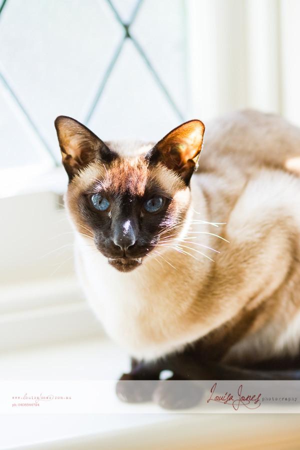 Pet Photography - Melbourne