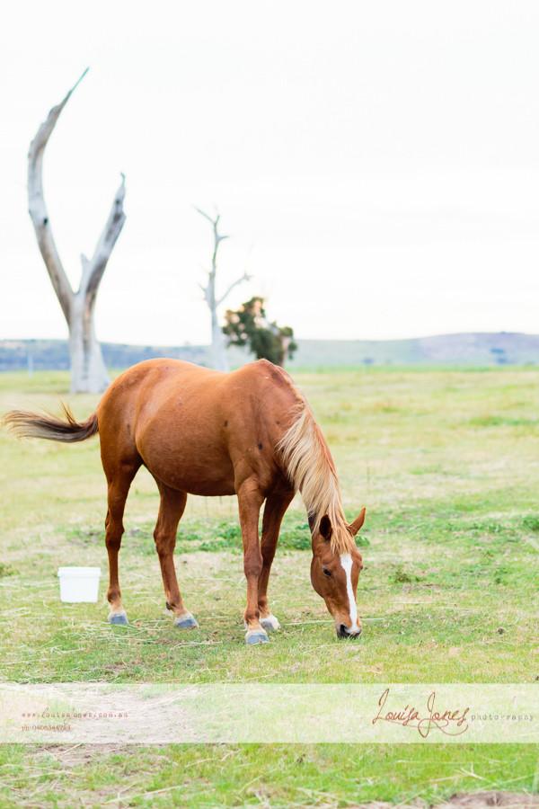 Horse Photography Bacchus Marsh 12.jpg