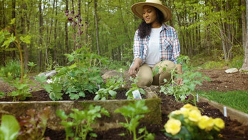 New-Skin Gardener