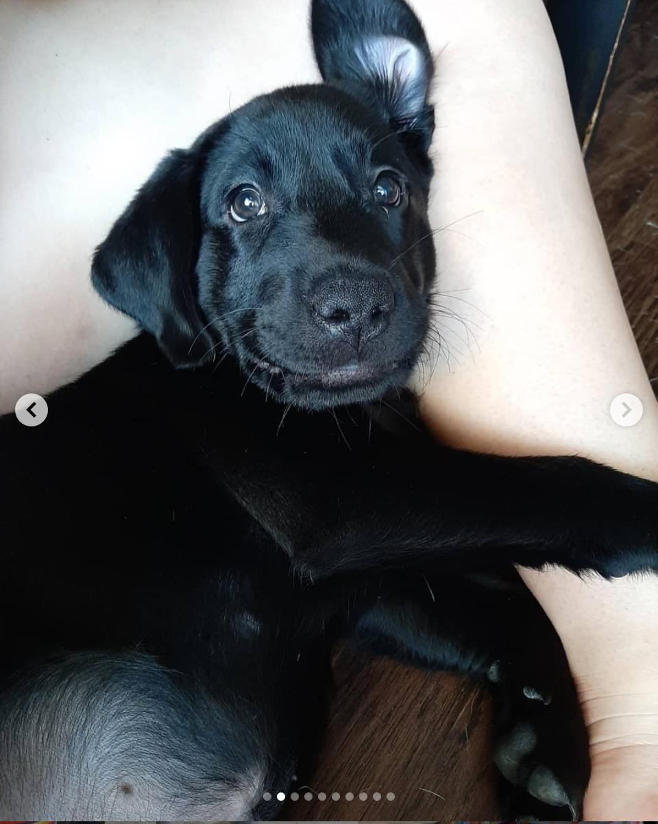 Puppy Socialization!