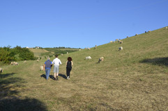A walk with a local shepherd.
