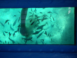 Playing with swimming fishes