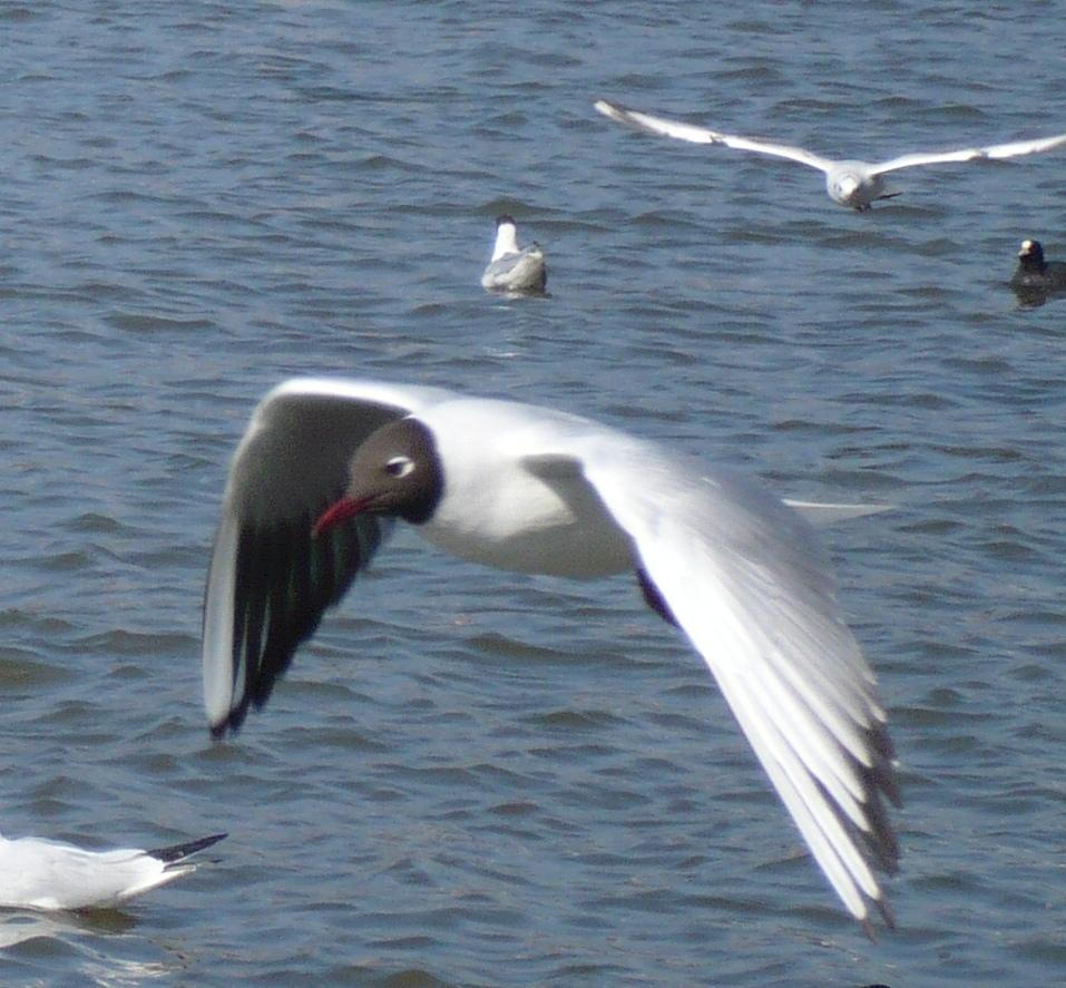 Bird flying over ocean