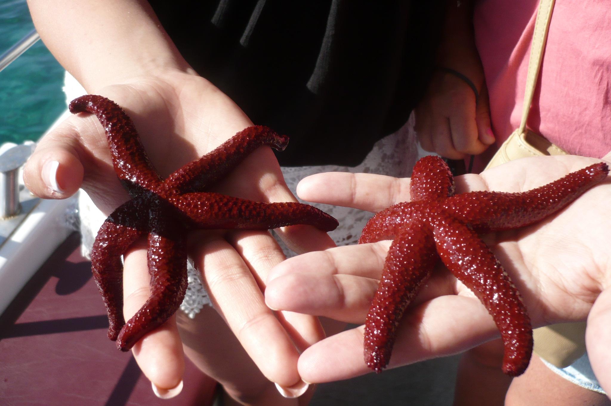 Starfish on Captain Nick's Boat