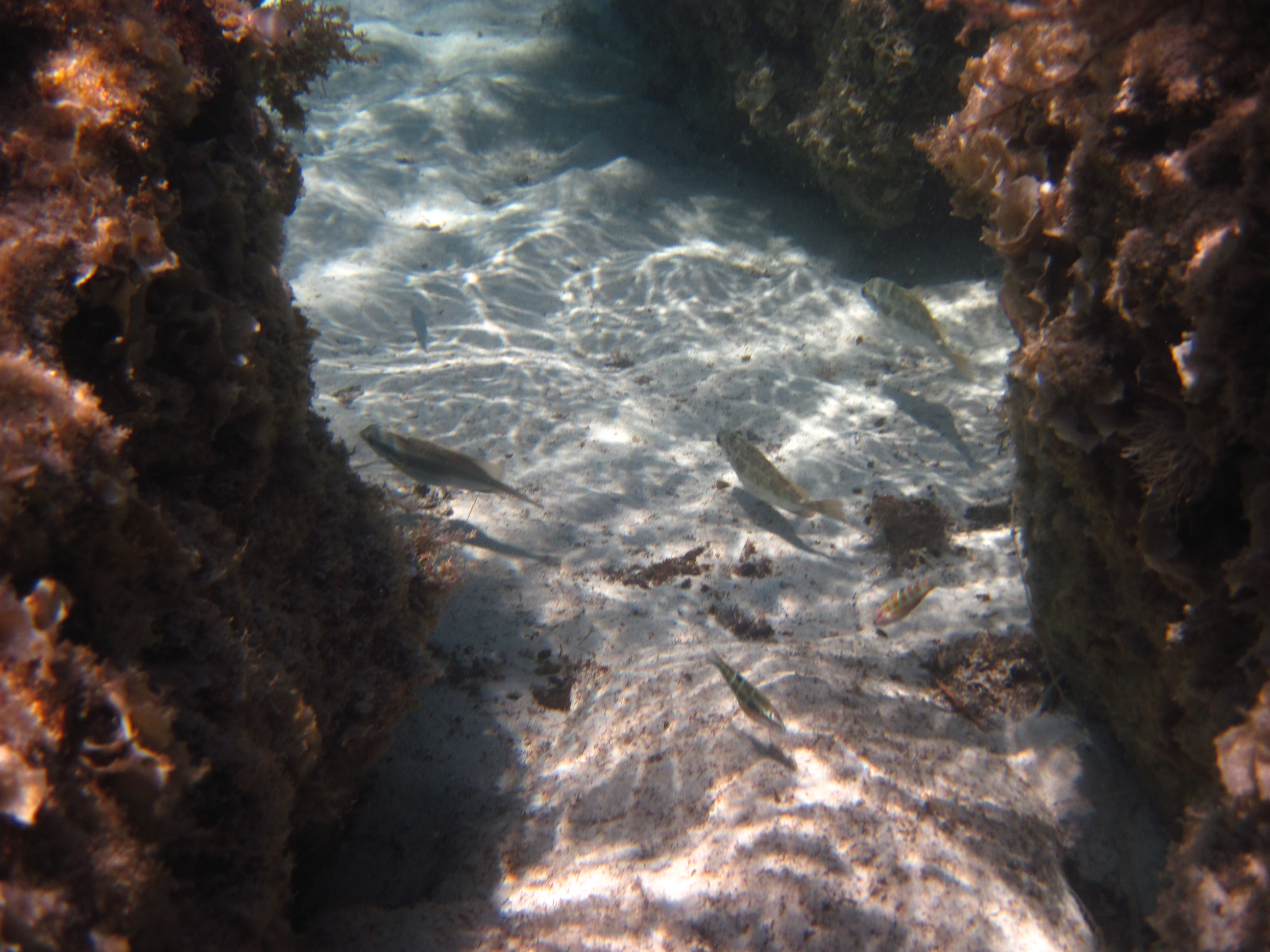Fish underwater shoreside