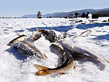 Тур на Байкал Подледный лов на Байкале