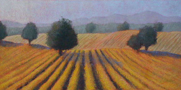 "VINEYARD GOLD, PASTEL ON PAPER, 14""X28"""