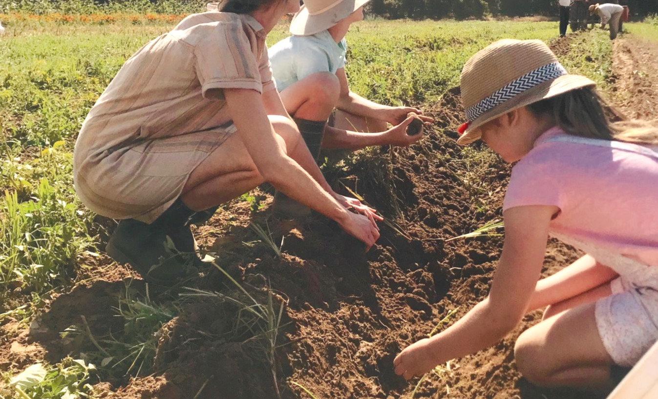 Farm Volunteer Day