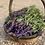 Thumbnail: Lavender Bunch