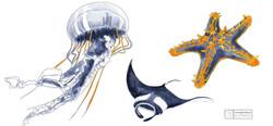 Illustration fonds marins 2650x1234