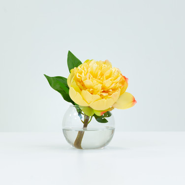 Yellow Peony Blossom in Glass Bowl