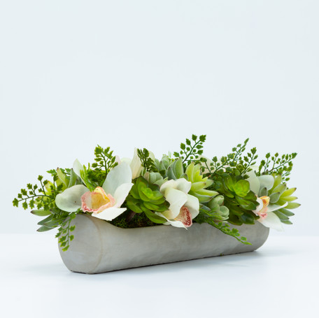 Echeveria and Orchids in Cement Platter