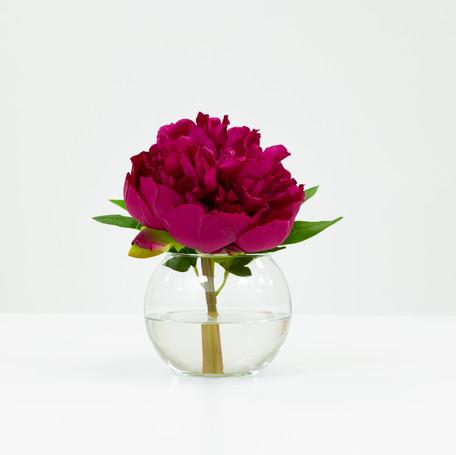 Magenta Peony Blossom in Glass Bowl
