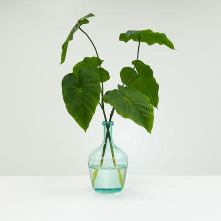 Anthurium in Green Bottle