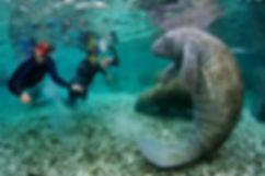 manatee-divers-INLINE.jpg