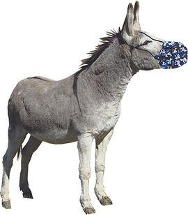 Donkey:mask.jpg
