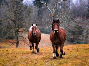 NEU: Stammtisch der Pferdefreunde