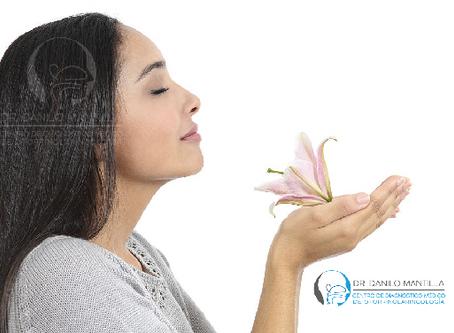 El olfato   Enfermedades y trastornos   Causas, diagnóstico y tratamiento