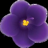 African-Violet_single-bud_no-leaf.png