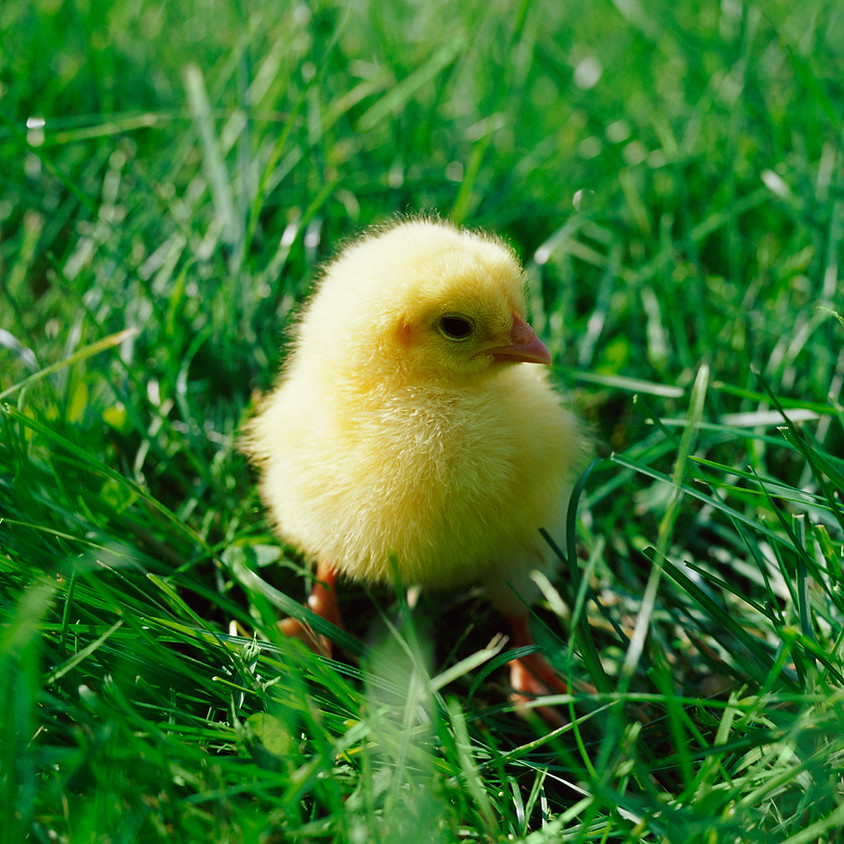Happy Easter! We are open until 5:00 pm for your caffeine fix! Breakfast and lunch all day!
