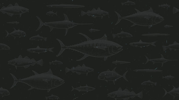 Fish_Patterns_Main.jpg