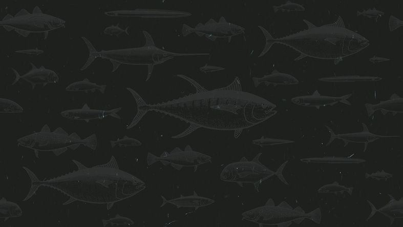 Fish_Patterns_Main.jpg
